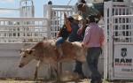 Image for Yuma County Fair Rodeo - Wednesday