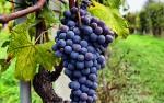 Image for Wine Tasting Dinner:  Women Winemakers