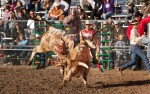 Image for The Pro-West Rodeo Finals
